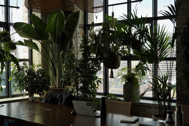 A hot desk on the 12th floor of Working From at The Hoxton. Surrounded by plants and with views over London.